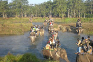 The elephant dilemma is not really a dilemma at all: a scientific response to the Nepali Times