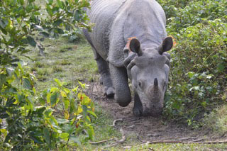 Nepal Conservation and Ecotourism Study, 2016